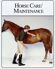 Bit-n-Bridle Children Horse Maintenance